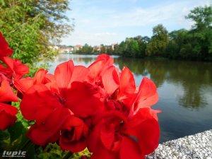 Blick über den Großen Teich